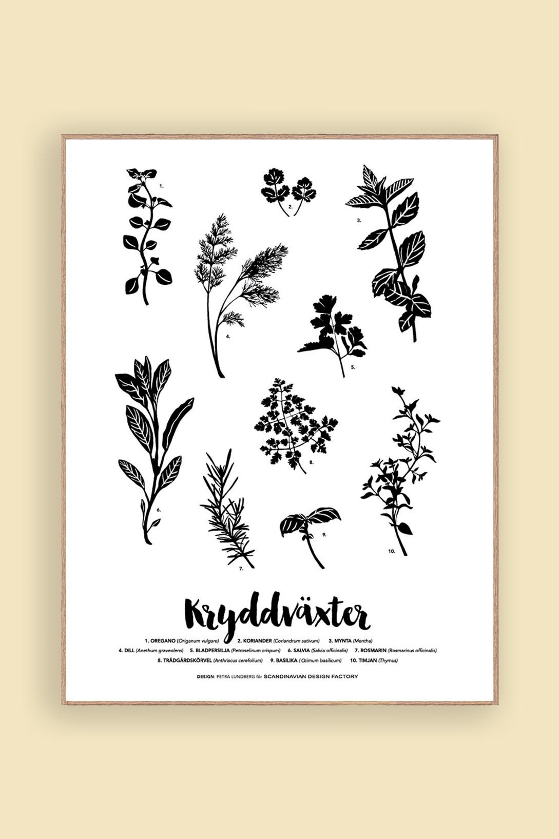 Print Kryddväxter