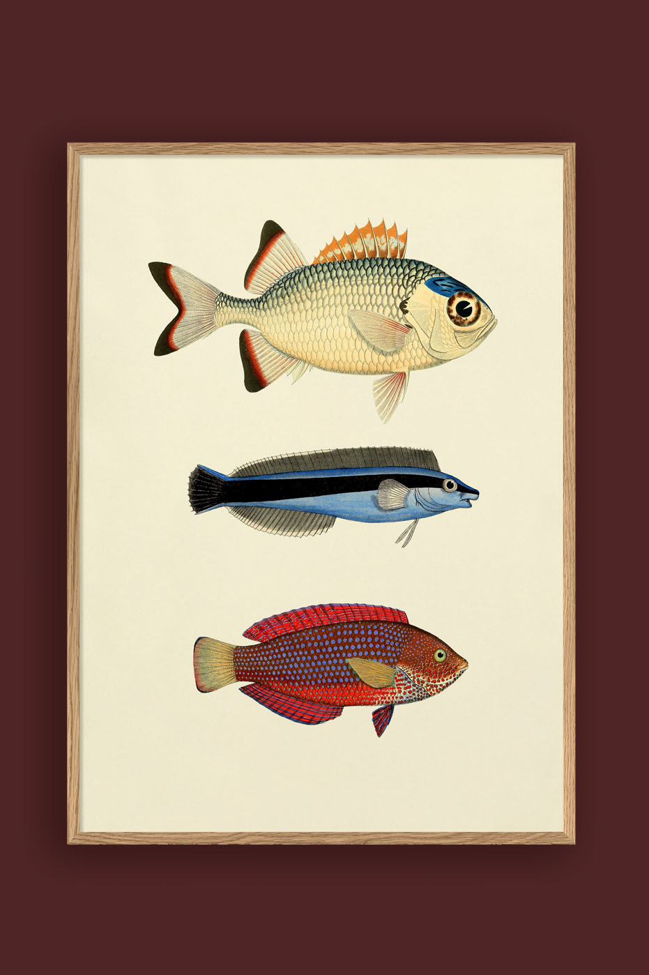 The Fishes Print #3906P 50x70cm