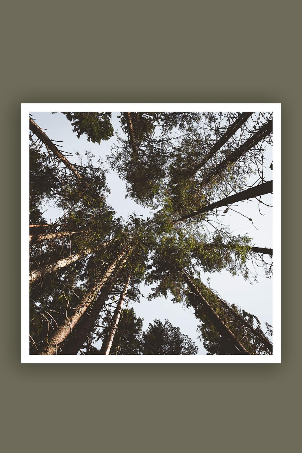 Trees 100x100cm