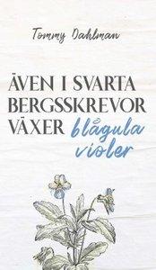 Även i svarta bergsskrevor växer blågula violer