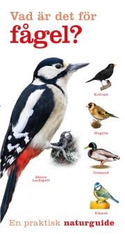Vad är det för fågel?