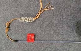 Kattvippa Cherokee