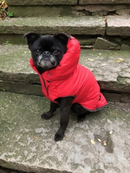 I Love My Dog Eco LLF Jacket