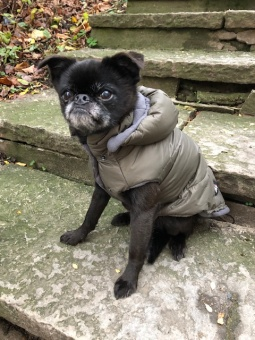 I Love My Dog Eco LLF Jacket