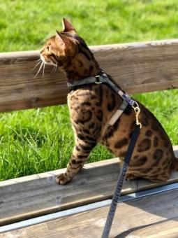 G&E Kattsele Strap Ställbar Camouflage