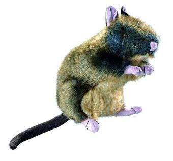 Hunter Wildlife råtta