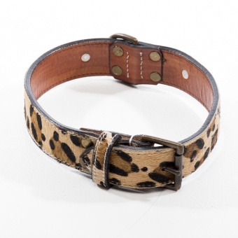 Dog Gossip Savannah Leo halsband
